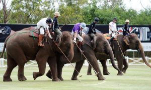 Unusual Sports of India